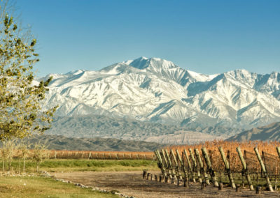 Mendoza-Vineyards-in-Argentina-1600x900